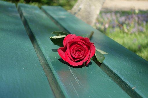 Red Rose, Empty Bench, Love, Romance, Emotion, Symbol