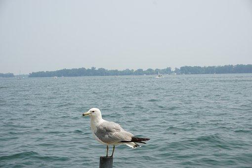Sea, Seagull, Bird, Coast