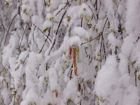 Tree, Birch, Element, Snow, Weather, Spring, Earrings
