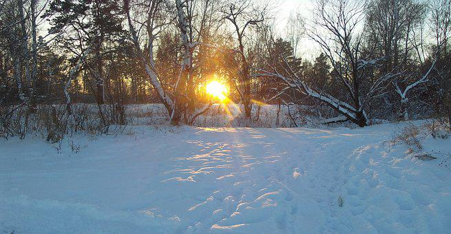 Winter, Forest, Winter Forest, Landscape, Sun, Trees