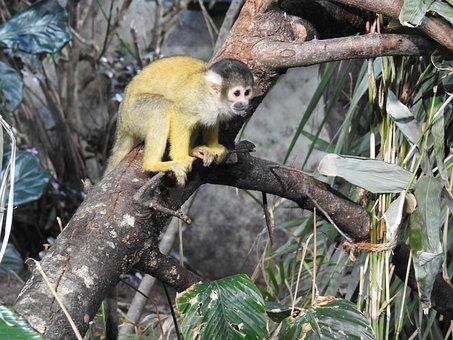 Zoo, Animal, äffchen, Animal World, Mr Nilsson, Monkey