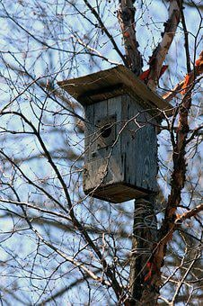 Birdhouse, Spring, House For Birds, Nature, Trees