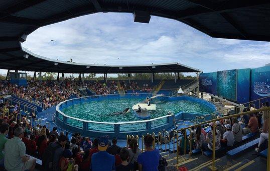 Miami Seaquarium, Dolphins, Killer Wales, Show, Animal