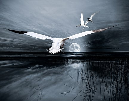 Composing, Landscape, Moon, Birds, Lake, Atmospheric