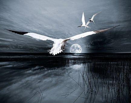 Composing, Landscape, Moon, Birds, Lake, Atmospheric