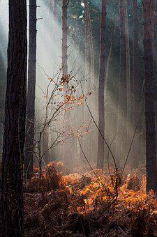 Forest, Light, Autumn, Close, Morgenstimmung, Nature