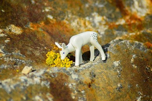 Wild Animal, Roe Deer, Hirsch, Nature, Wild, Forest