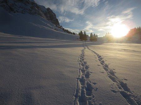 Snow Tracks, Wintry, Trace
