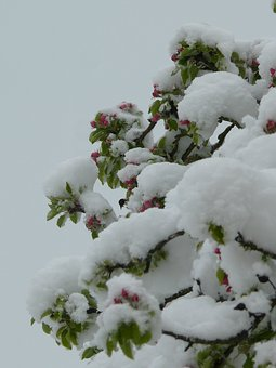 Winter, Spring, Contrast, Tree, Flowers, Nature, Plant