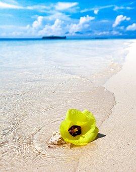 White Sand Beach, Beach, Yellow Flowers, Turn Hard Bow