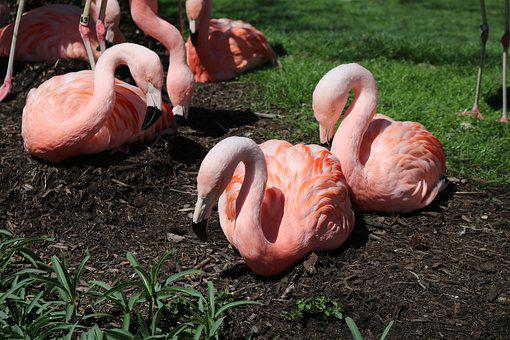 Earth Day, Flamingos, Nature, Bird, Pink, Zoo, Animal