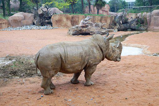 Rhino, Zoo, Animals, Animal World, Zoological Gardens