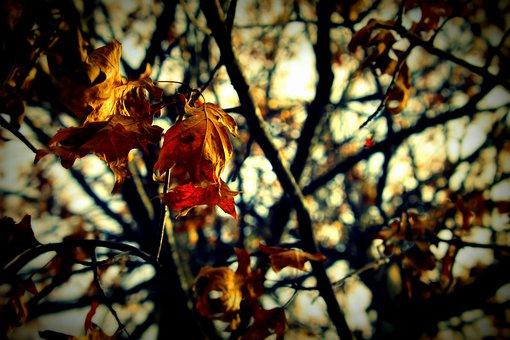 Leaves, Fall, Fall Leaves, Autumn