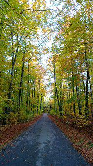 Autumn, Landscape, Forest, Away, Forest Path, Road