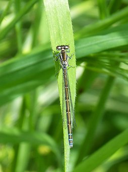 Dragonfly, Damselfly, Flying Insect, Leaf, Beauty
