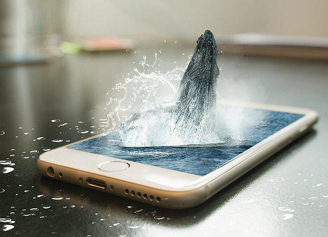 Phone, Whale, Remix, Design, Iphone, Photomanipulation