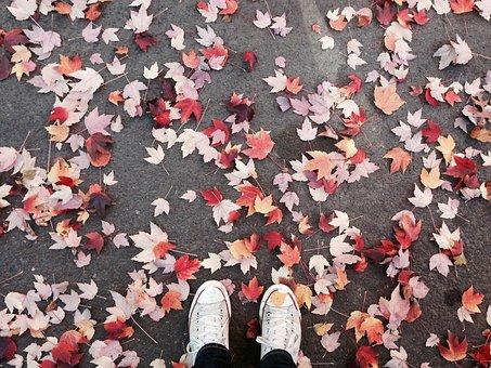 Fall, Leaves, Portland, Converse, Autumn, October