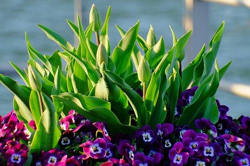 Flowers, Close, Blossom, Bloom, Nature, Blue