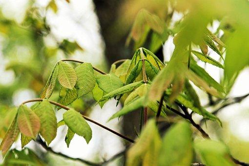 Leaves, Summer, Bloom, Nature, Leaf, Green, Design