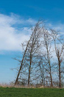 Landscape, Meadowlands, Trees, Bare Branches, Blue