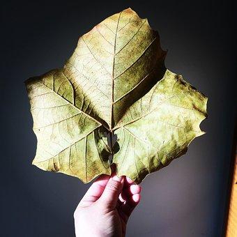 Leaf, Maple Leaf, Fall Autumn, Nature, Maple, Green