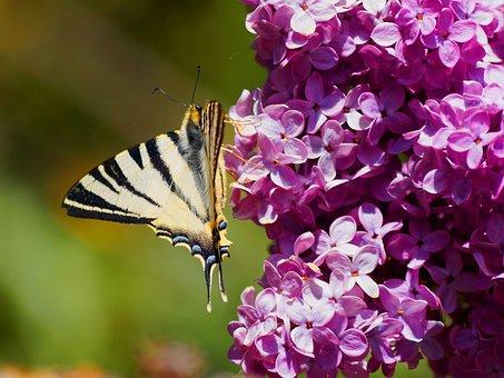 Butterflies, Flamed, Forage, Nature, Steering Wheel