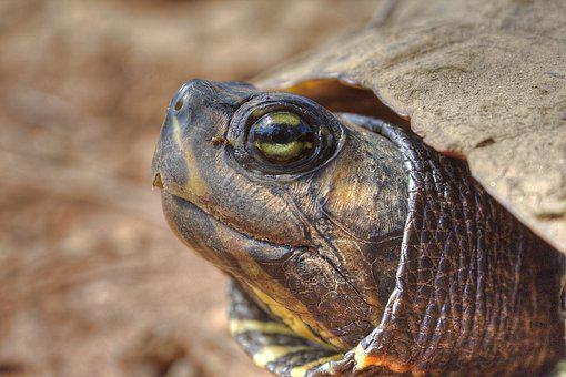 Turtle, Close Up, Wildlife, Nature, Shell, Tortoise