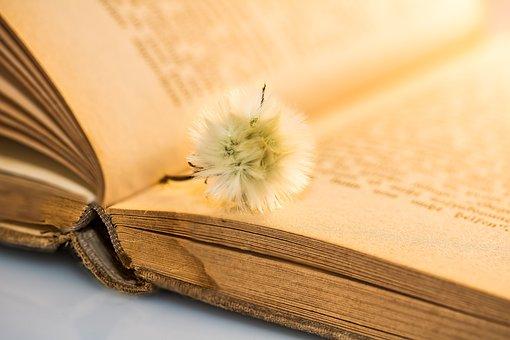 Old Book, Small Dandelion, Faded