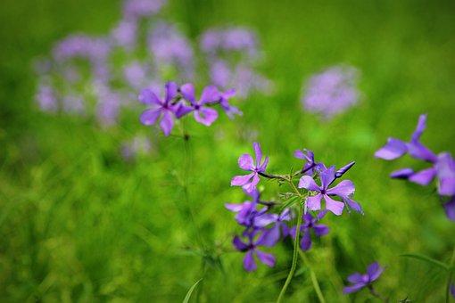 Flowers, Spring, Spring Flowers, Spring Flower, Nature