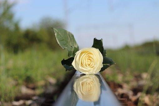 White Rose, Railway, Child Suicide, Tragedy