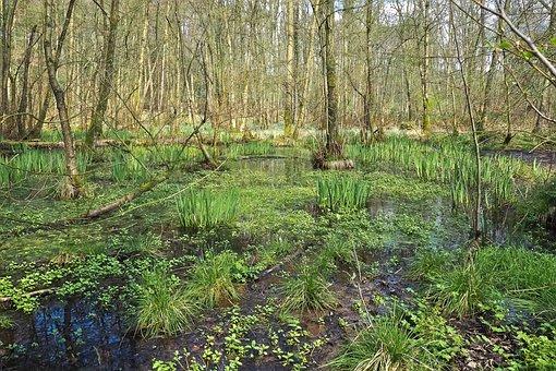 Landscape, Swamp, Marsh, Trees, Bare Branches, Mood