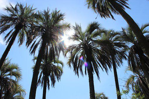 Palms, Landscape, Sun, Nature, Exotic, Vegetation