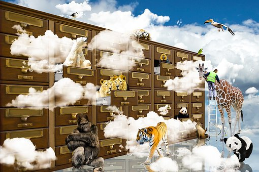 Fantasy, Animals, Clouds, Lion, Tiger, Polar Bear