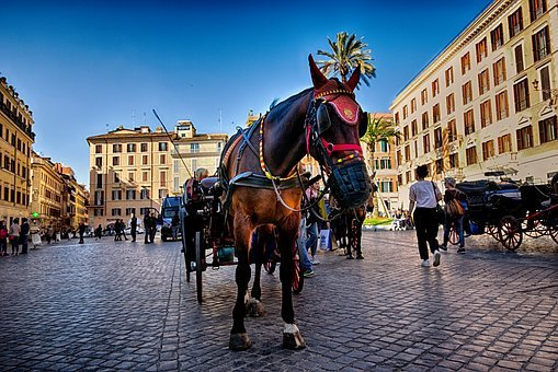 Horse, Rome, Italy, Tourism, Piazza, Travel, City