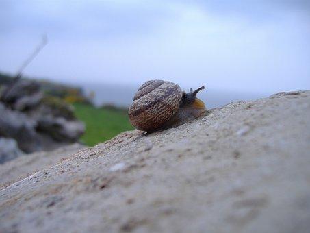 Snail, Rock, Climbing, Shell, Nature, Mollusk, Slow