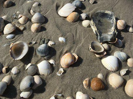 North Sea, Beach, Sand, Mussels, Coast, By The Sea