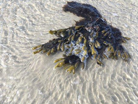 North Sea, Beach, Sand, Seaweed, Coast, By The Sea