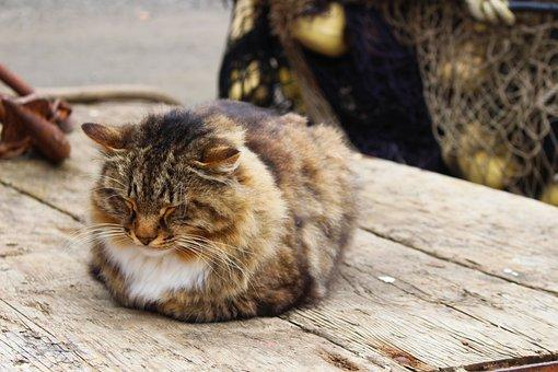 Cat, Sleeping, Outdoor, Relaxed, Comfort, Adorable