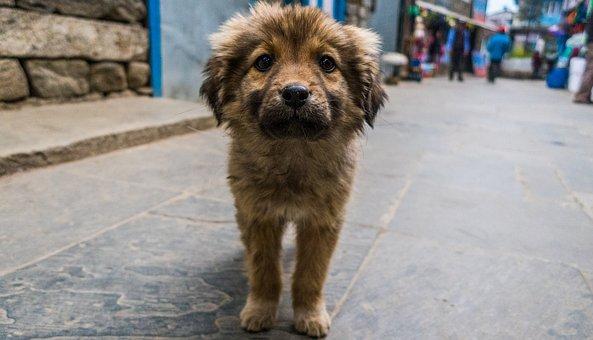 Cute, Puppy, Dog, Street Dog, Canine, Animal, Adorable