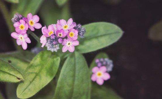 Forget, Spring, Violet, Flower, Green, The Background