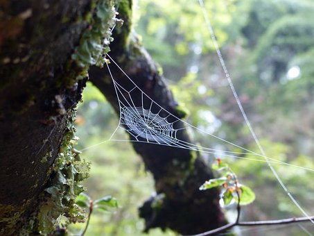 Forest, Moss, Cobweb, Green, Tree Stump, Landscape