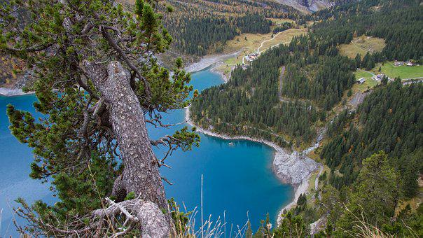 Bergsee, Tree, Lake Oeschinen, Switzerland