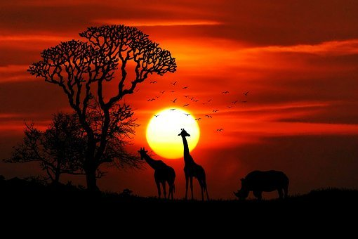 Africa, Animals, Safari, Rhino, Giraffes, Big Game