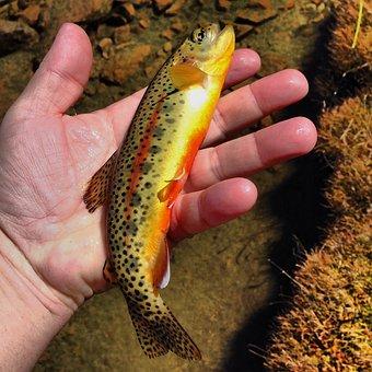 Fishing, Outdoors, Fly-fishing, Fisherman, Water