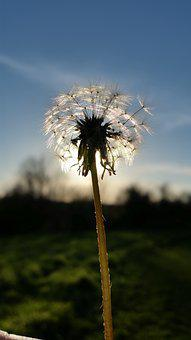 Flowers, Pictures, Wish