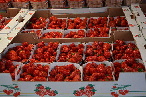 Strawberries, Trays, Red, Fruit, Red Fruits, Nature
