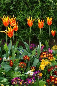 Paris, Flower, Garden, Gardening, Orange, Crowd