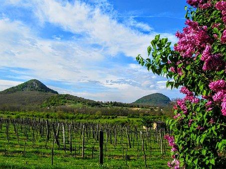 Remnant Hills Of, Tóti-hegy, Mount, Grape, Organ
