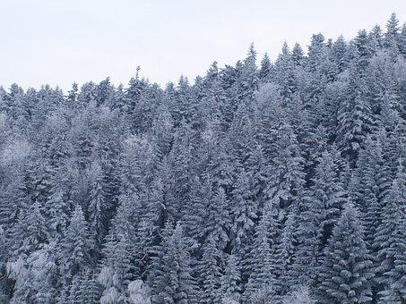 Hard Rime, Mountains, Snow, Winter, Forest
