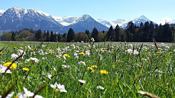 Alpine, Mountain Meadow, Mountains, Allgäu, Nature